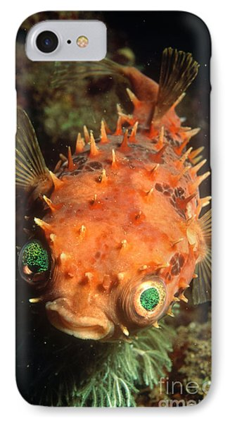 Rounded Porcupine Fish IPhone Case