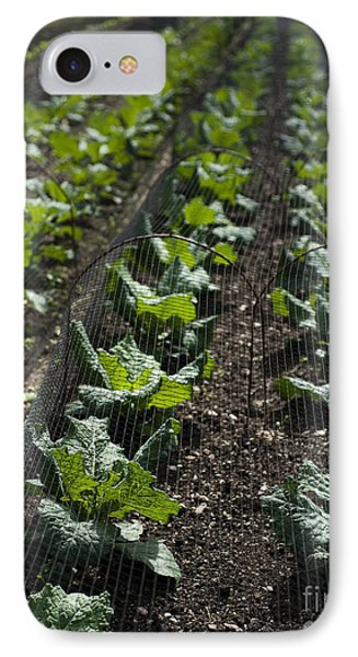 Rows Of Cabbage Phone Case by Anne Gilbert