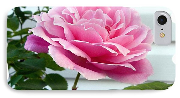 Royal Kate Rose IPhone Case by Will Borden