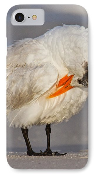 Royal Tern IPhone Case by Betsy Knapp