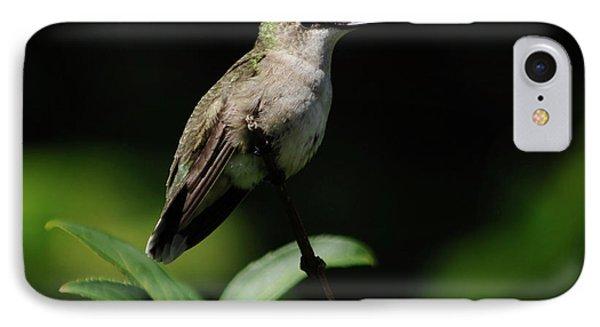 Ruby-throated Hummingbird Female IPhone Case