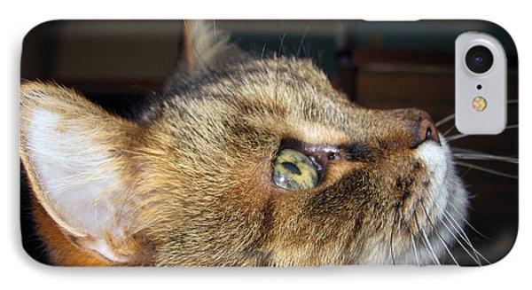 IPhone Case featuring the photograph Runcius- The King Kitty by Ausra Huntington nee Paulauskaite