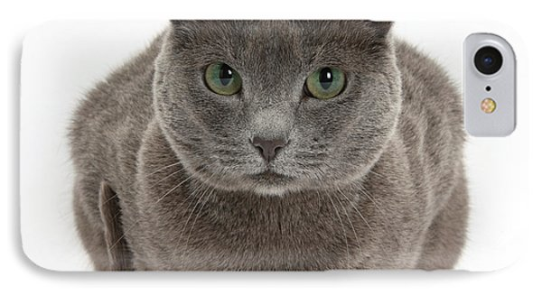 Russian Blue Cat Phone Case by Mark Taylor