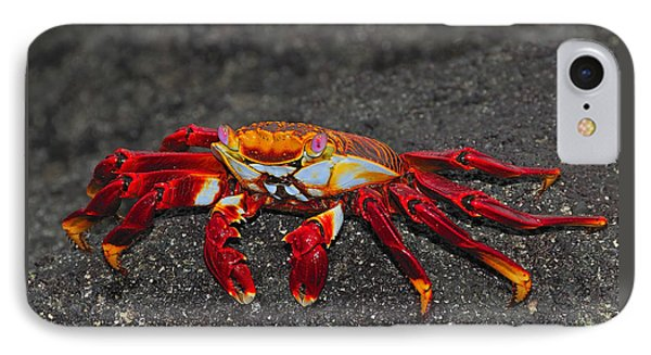 Sally Lightfoot Crab Phone Case by Tony Beck