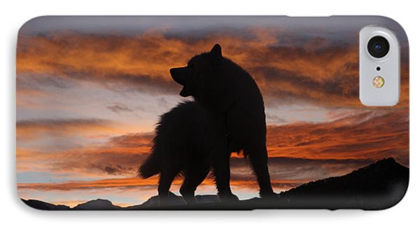 Samoyed At Sunset Phone Case by Kent Dannen and Photo Researchers