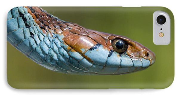 San Francisco Garter Snake Portrait IPhone Case by Sebastian Kennerknecht