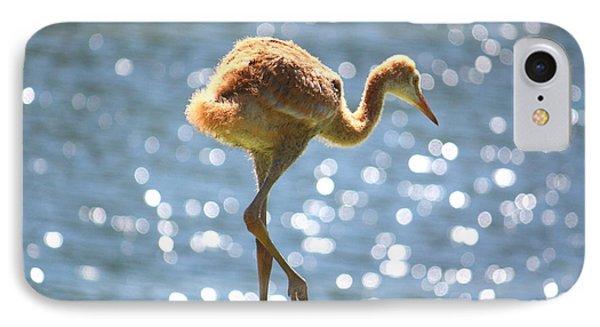 Sandhill Crane Daydreamer IPhone Case by Carol Groenen