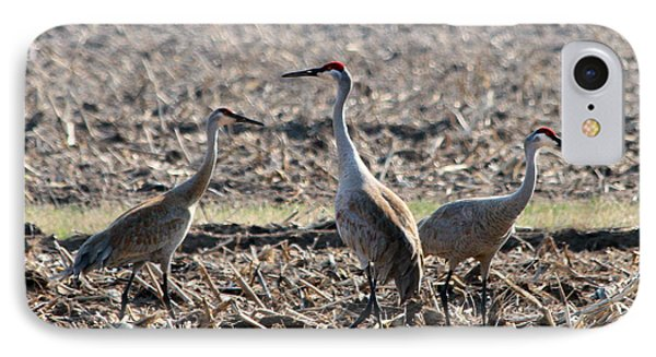 IPhone Case featuring the photograph Sandhill Crane Trio by Mark J Seefeldt