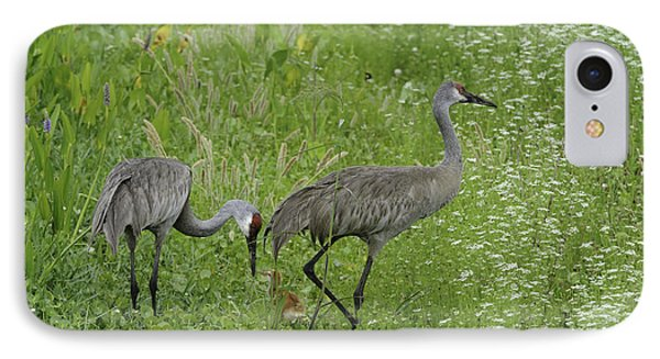 IPhone Case featuring the photograph Sandhill Cranes And Chick by Bradford Martin