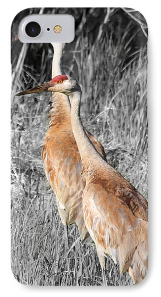 Sandhill Cranes In Select Color IPhone Case by Mark J Seefeldt