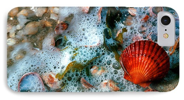 IPhone Case featuring the photograph Scallop And Seaweed 11c by Gerry Gantt