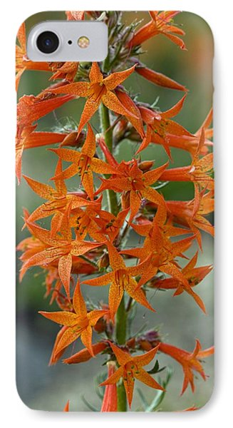Scarlet Gilia (ipomopsis Aggregata) IPhone Case by Bob Gibbons