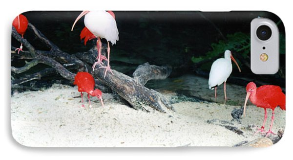 IPhone Case featuring the photograph Scarlet Ibis And Spoonbills by Maureen E Ritter