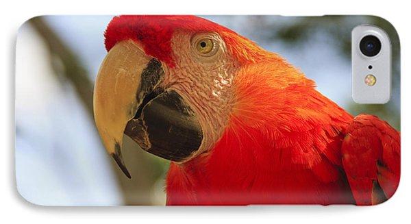 Scarlet Macaw Parrot Phone Case by Adam Romanowicz