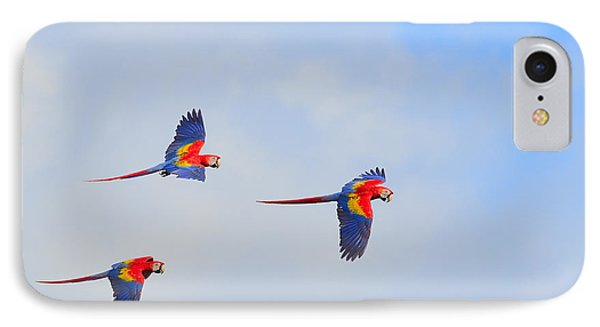 Scarlet Macaws IPhone Case by Tony Beck