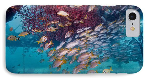 Schools Of Gray Snapper, Yellowtail Phone Case by Terry Moore