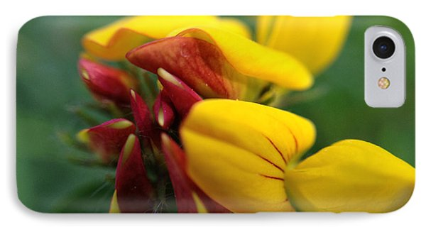 IPhone Case featuring the photograph Scotch Broom by Chriss Pagani