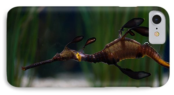 Sea Dragons IPhone Case by Carol Ailles