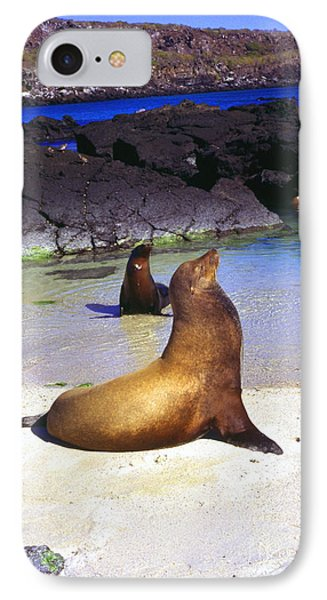 Sea Lions On Genovesa Island Phone Case by Thomas R Fletcher