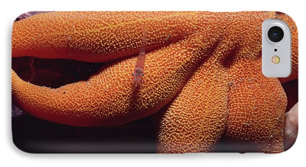 Sea Star With Red Shrimp Baffin Island Phone Case by Flip Nicklin