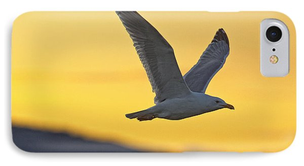 Seagull Flying At Dusk With Sunset Phone Case by Robert Postma