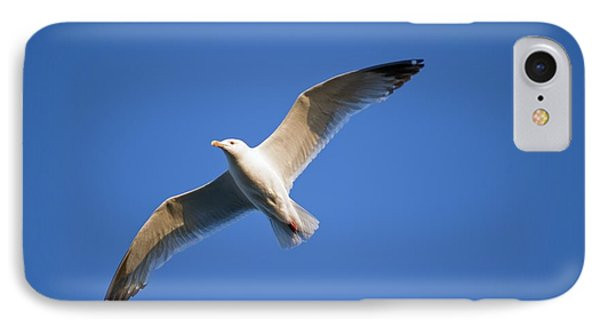 Seagull Flying Phone Case by Keith Levit