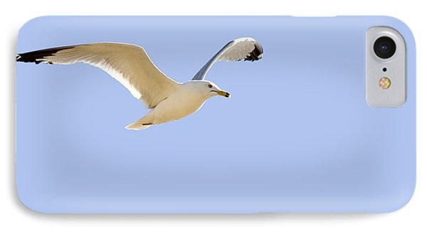 Seagull In Flight Phone Case by Don Hammond