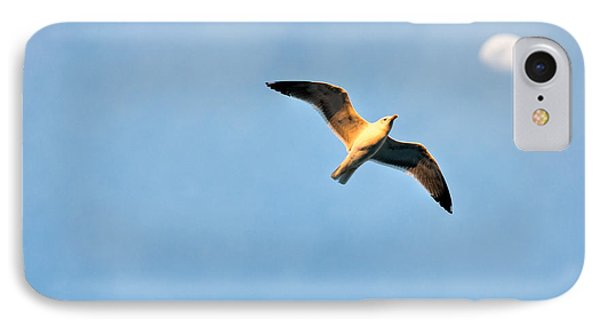 IPhone Case featuring the photograph Seagull by Luciano Mortula