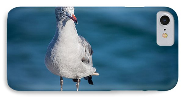 Seagull IPhone Case by Ralf Kaiser