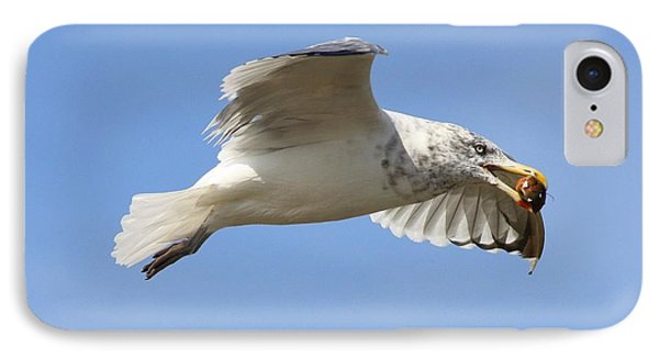 Seagull With Snail IPhone Case by Carol Groenen