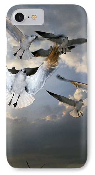 Seagulls In Flight Phone Case by Natural Selection Ralph Curtin