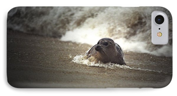 Seal In The Surf At Lajolla Beach No.004 IPhone Case