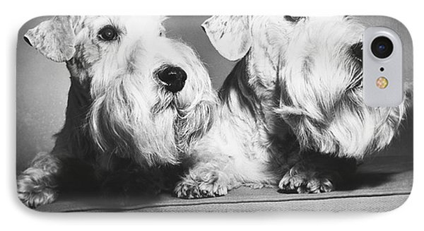 Sealyham Terriers Phone Case by M E Browning and Photo Researchers