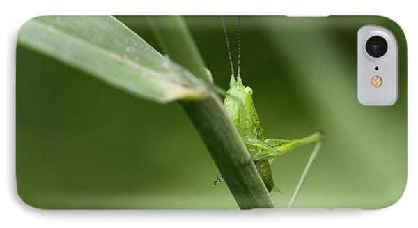 Secretive Katydid IPhone Case by Brian Magnier