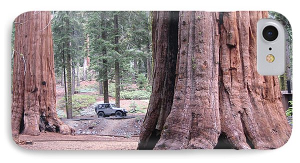 Sequoia  Trees 2 IPhone Case