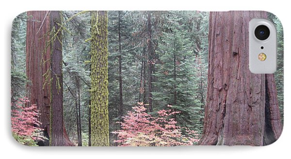 Sequoia  Trees  IPhone Case