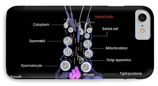 Sertoli Cells, Diagram Phone Case by Francis Leroy, Biocosmos