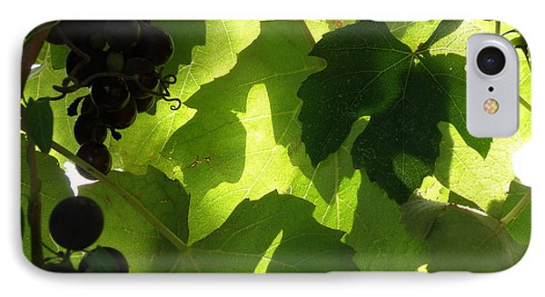 Shadow Dancing Grapes IPhone Case by Lainie Wrightson