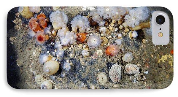 Shaggy Mouse Nudibranchs Phone Case by Alexander Semenov