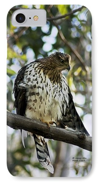 Sharp Shinned Hawk - Winged Stare -5459 IPhone Case by James Ahn