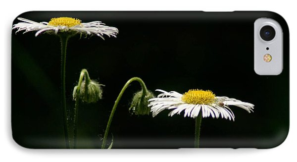 IPhone Case featuring the photograph Shasta Daisies by Mitch Shindelbower