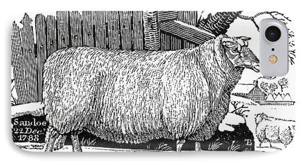 Sheep, 1788 Phone Case by Granger