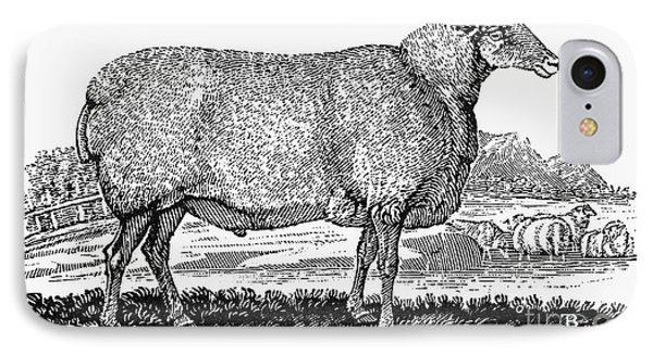 Sheep, C1800 Phone Case by Granger