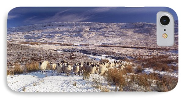 Sheep In Snow, Glenshane, Co Derry Phone Case by The Irish Image Collection