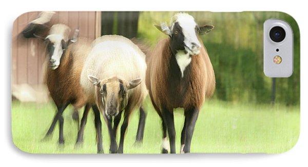 Sheep On The Run Phone Case by Karol Livote