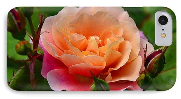 Sherbet Rose IPhone Case by Bonnie Myszka