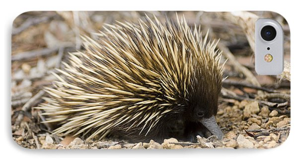 Short-beaked Echidna Phone Case by Matthew Oldfield