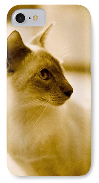 Siamese Feline IPhone Case by Lenny Carter
