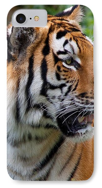 IPhone Case featuring the photograph Siberian Tiger by Cindy Haggerty