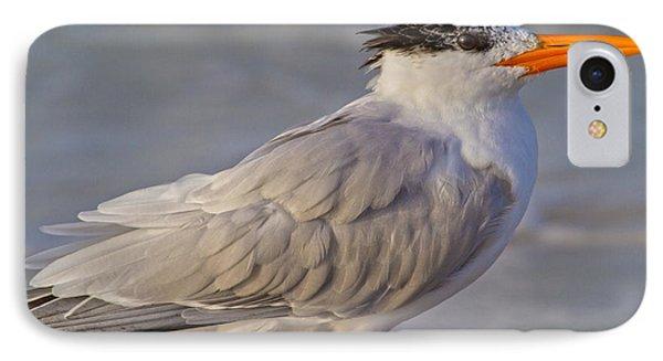 Siesta Key Royal Tern IPhone Case by Betsy Knapp